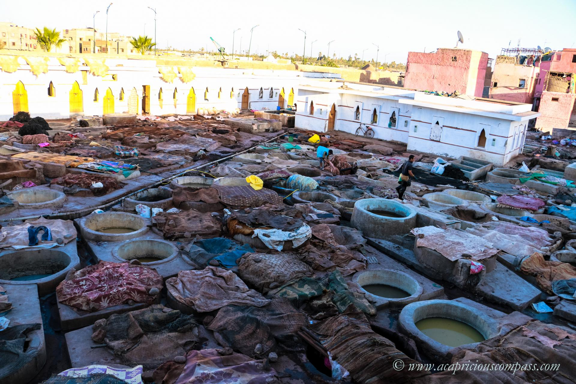 top things to do in Marrakech tannery bab debbagh