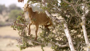 """Screening for public schools: """"Malin comme une chèvre"""" (Smart as a goat)"""