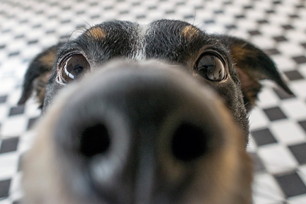 Dog-sniff-crotch-wp