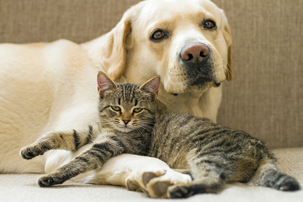 pets-and-xylitol-wp
