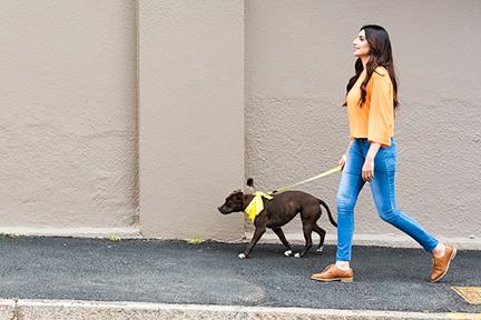walk-dog-uva-wp