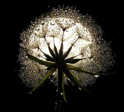 bursting seed