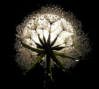 find-your-inner-light