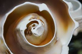 A shell like this opened my heart in a way that hearing seven points about God could never do.