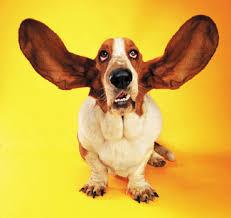 imagesdog ears