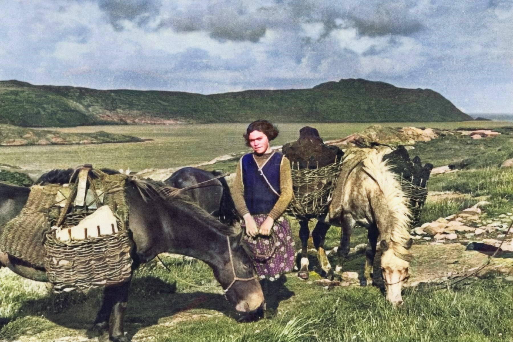Iconic Horses Of Scotland Darach Croft