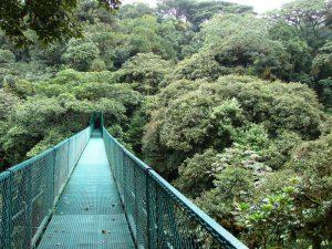 Sky_Walk_13,_Monteverde,_Costa_Rica