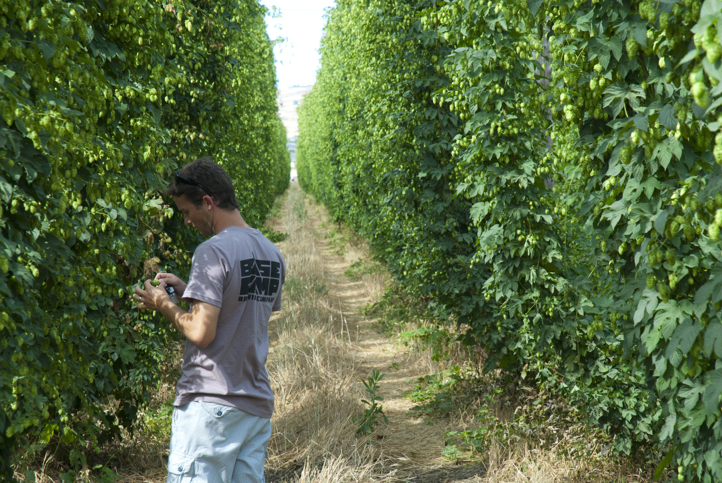 Justin in hops row