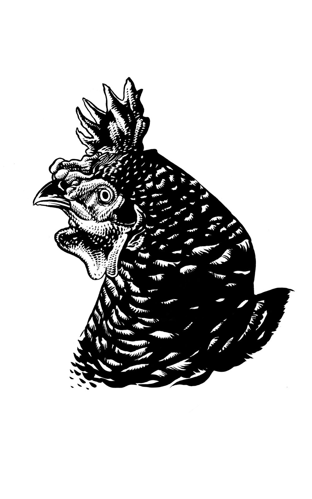 Chicken 824 1.jpg
