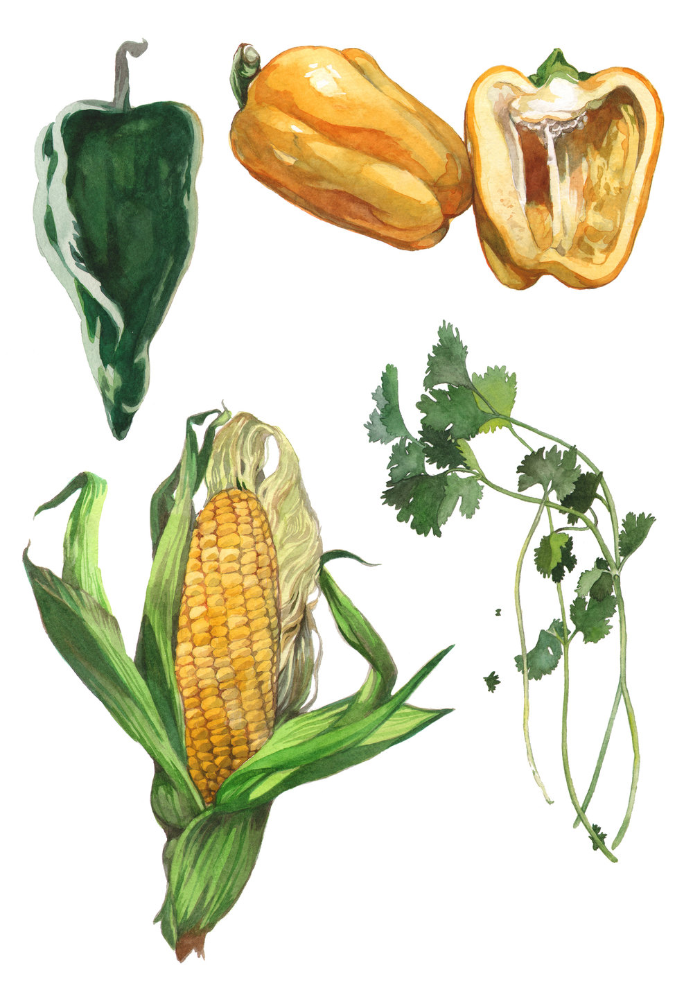 corn-peppers-cilantro.jpg