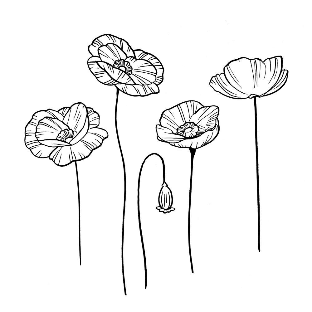 poppy sketches 2edit.jpg