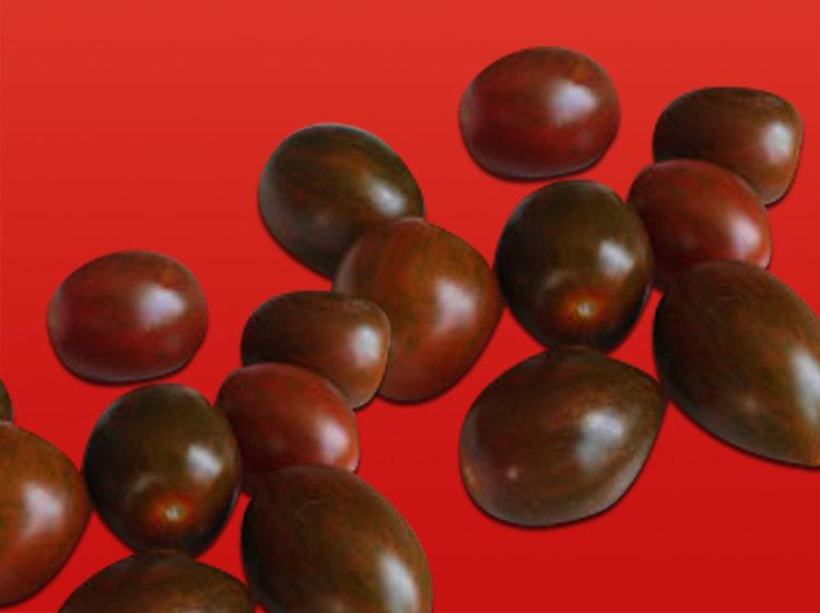 Tomate cerise prune (Marion)