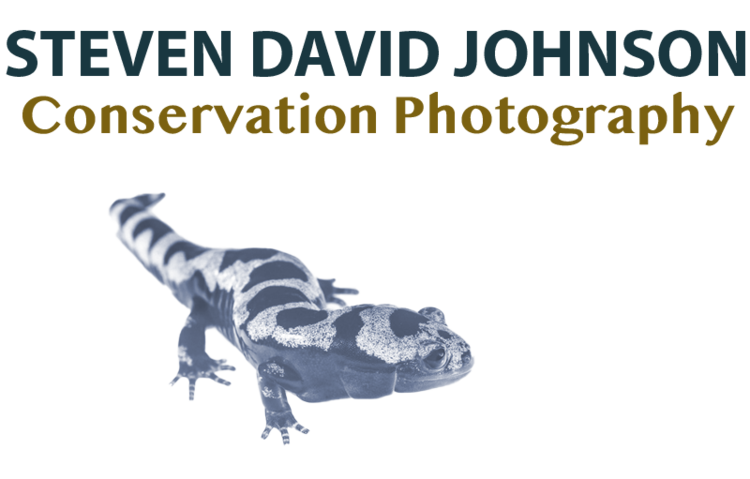 Steven David Johnson - Conservation Photography