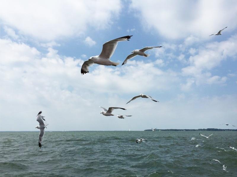 Birds at Kelleys Island