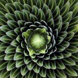 fractal-plant