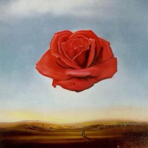 meditative-rose