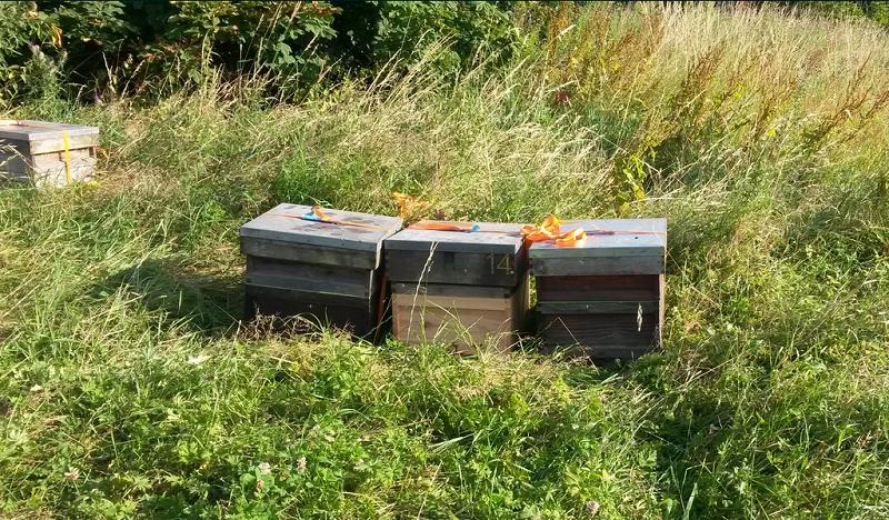 leeds-honey-bees