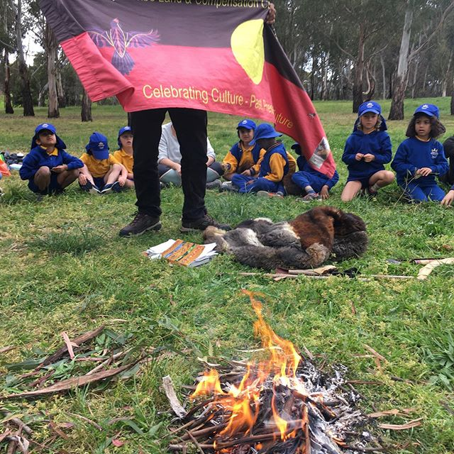 Celebrating Wurundjeri culture at Merri Merri yalluk with Uncle Bill and prep students #learningoncountry #wurundjeriland #tawnyfrogmouth
