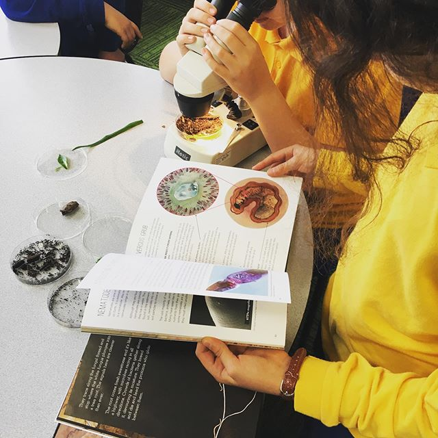 """Young scientists investigating Merri Merri's soil under the microscope alongside """"Nema and the Xenos: A story of soil cycles"""" by @scalefreenetwork written by @ailsawild and illustrated by @aviva_reed #soil #morelandprimaryschool #scalefreenetwork #soilliteracy #fungi #nematodes #moreland"""