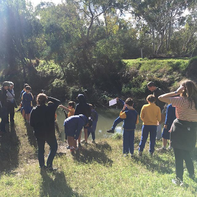 Happening now at the Merri Merri, 5/6s students, teachers and parents wondering around the square metre with @scalefreenetwork and birds are singing the change of seasons #waterliteracy #squaremetre #gulingseason