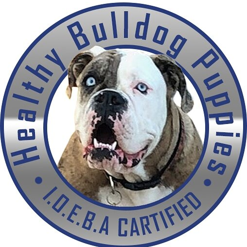 Guide To Finding A Healthy Bulldog Puppies