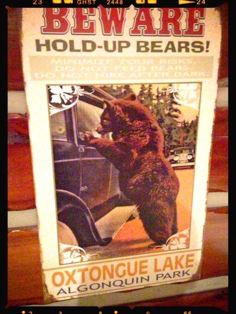 hold-up-bears