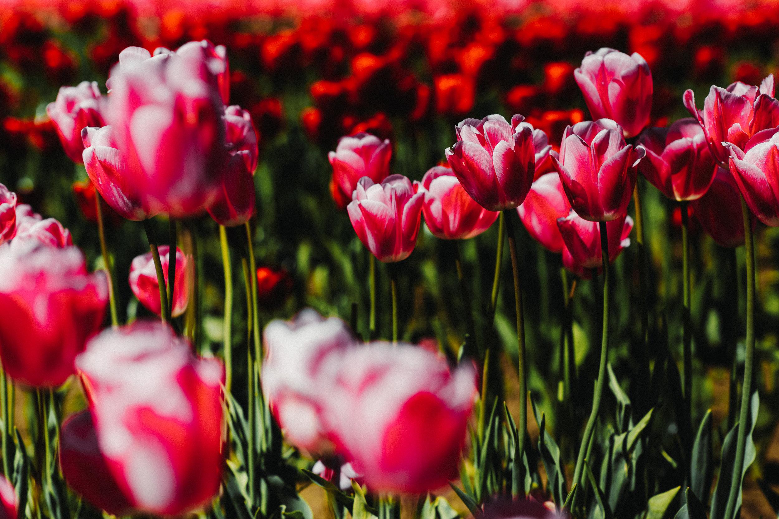 green floral dress tulip farm-3013
