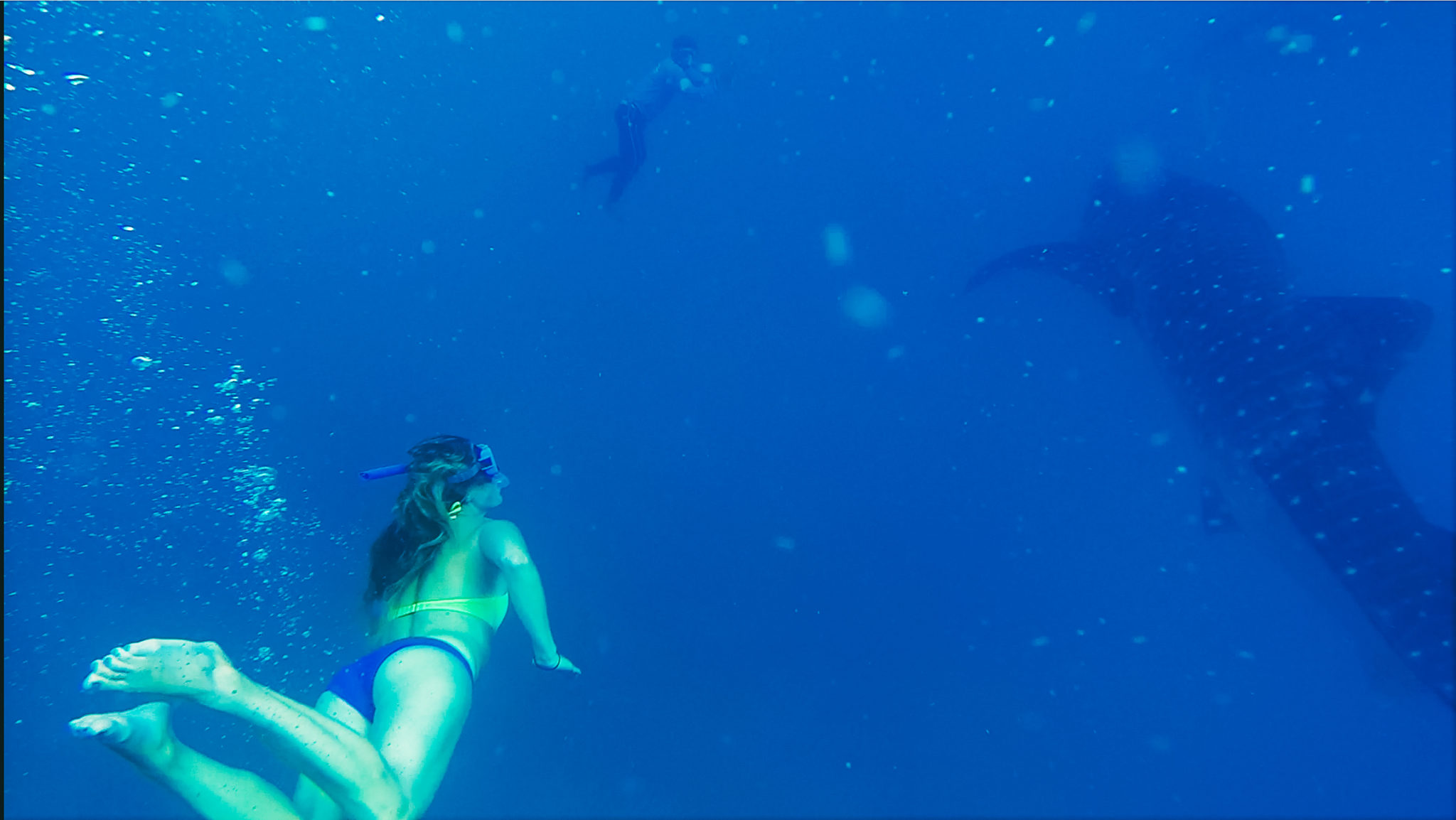 swimming with whale sharks oslob philippines