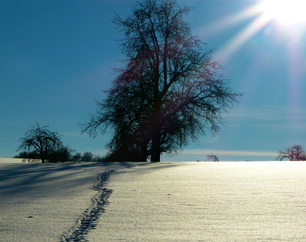 Footsteps in snow to tree