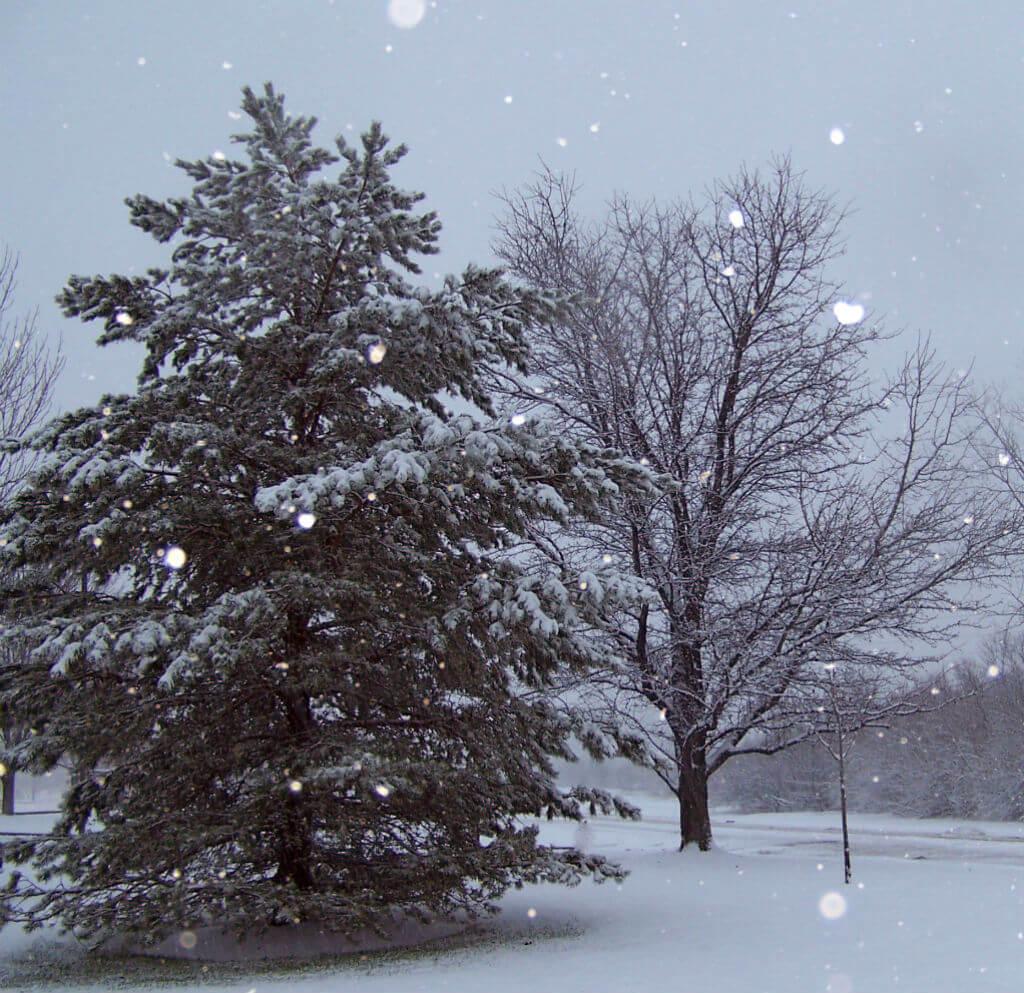 Winter Wonderland - Natures Pages