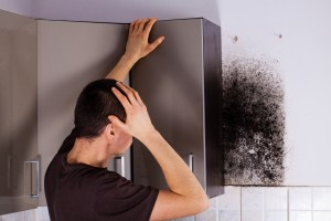 mold removal norman, how to get rid of mold, mold removal okc, mold removal moore