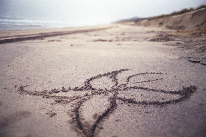 sand_butterfly