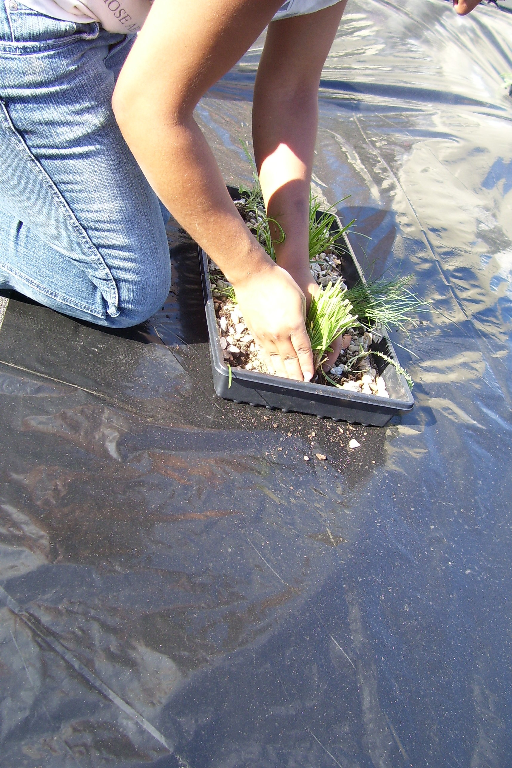 Seeding the City, planting day at Covenant House