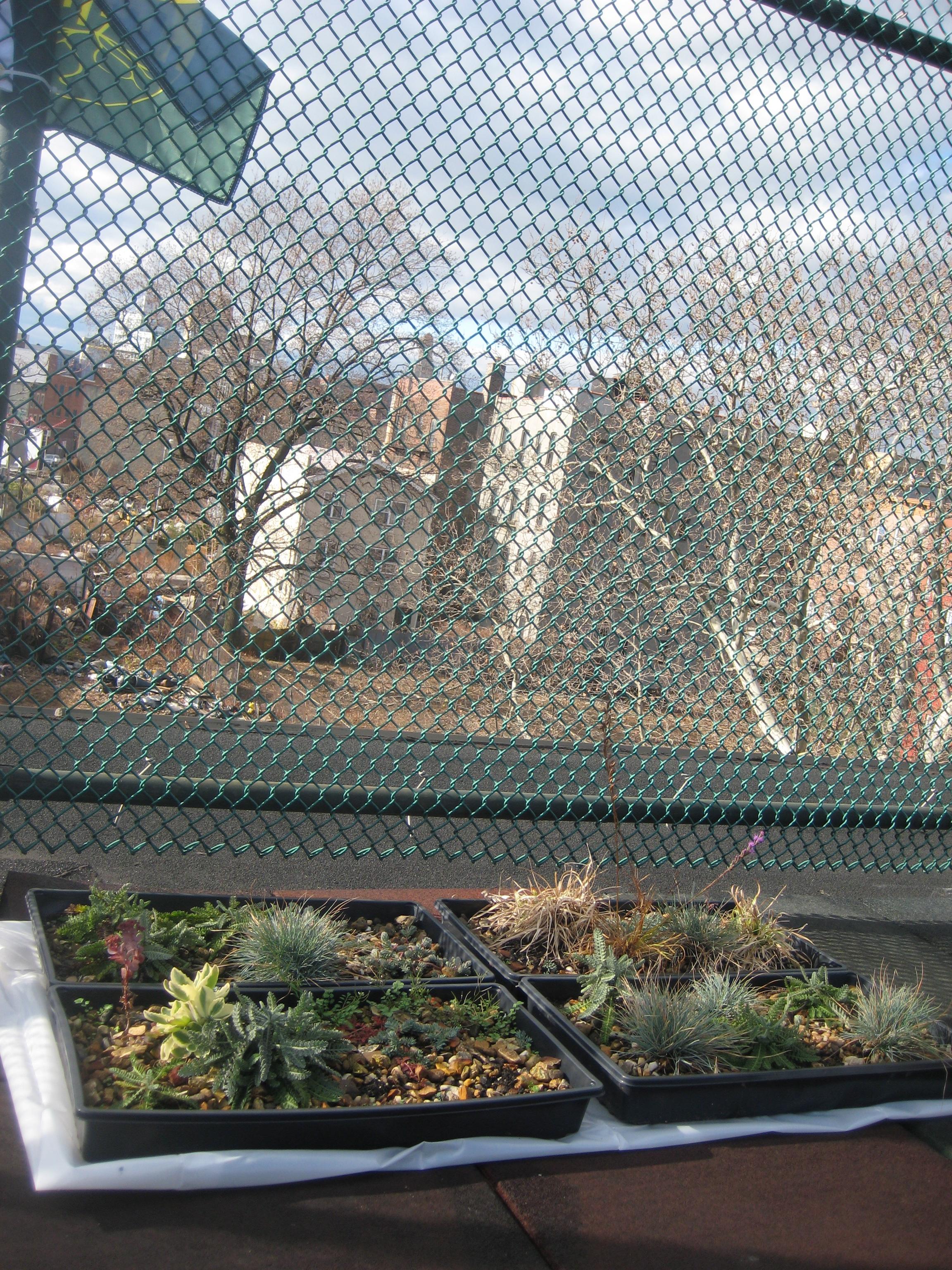 Seeding the City, in situ, Brooklyn