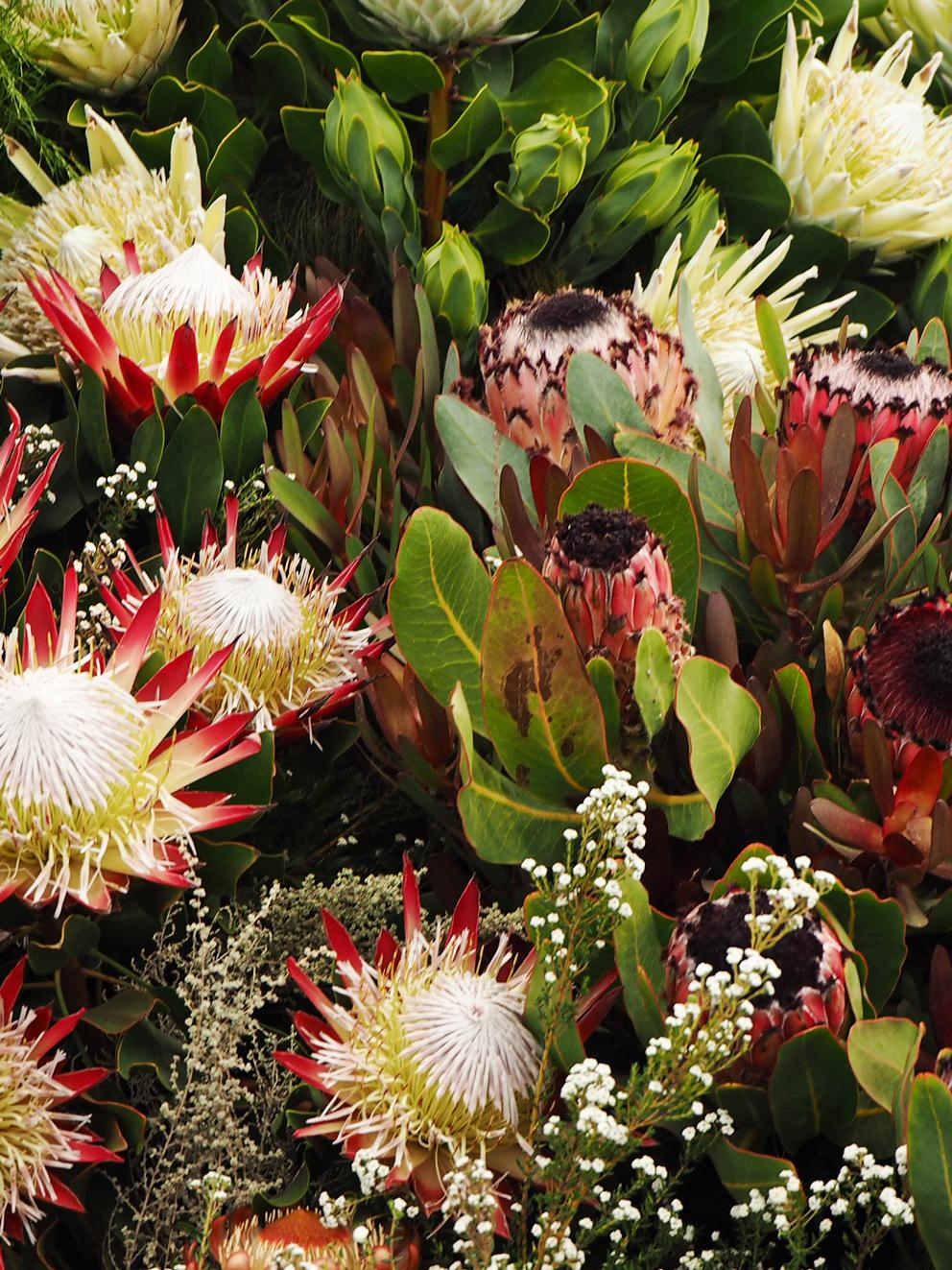 French For Pineapple Blog - RHS Chelsea Flower Show 2017 - protea garden