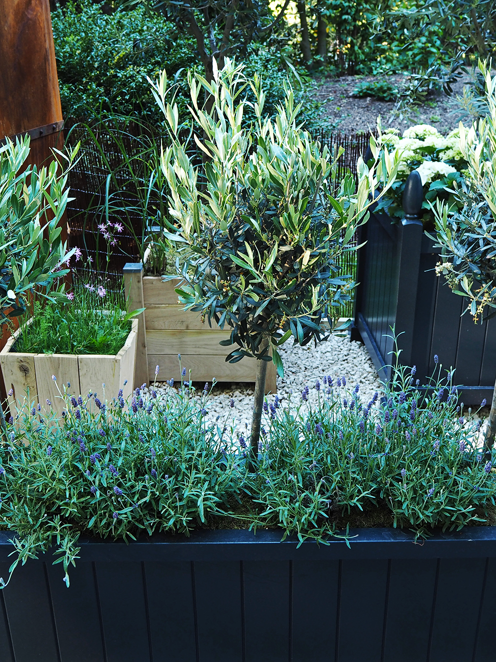 French For Pineapple Blog - RHS Chelsea Flower Show 2017 - Traditional planters with Olive and Lavender