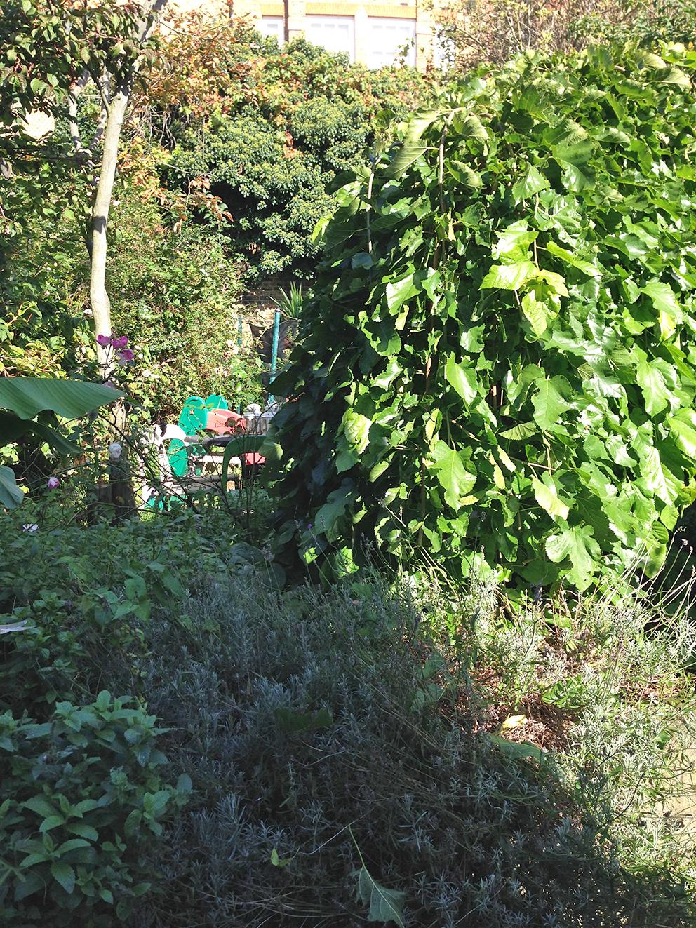 Overgrown garden - French For Pineapple Blog