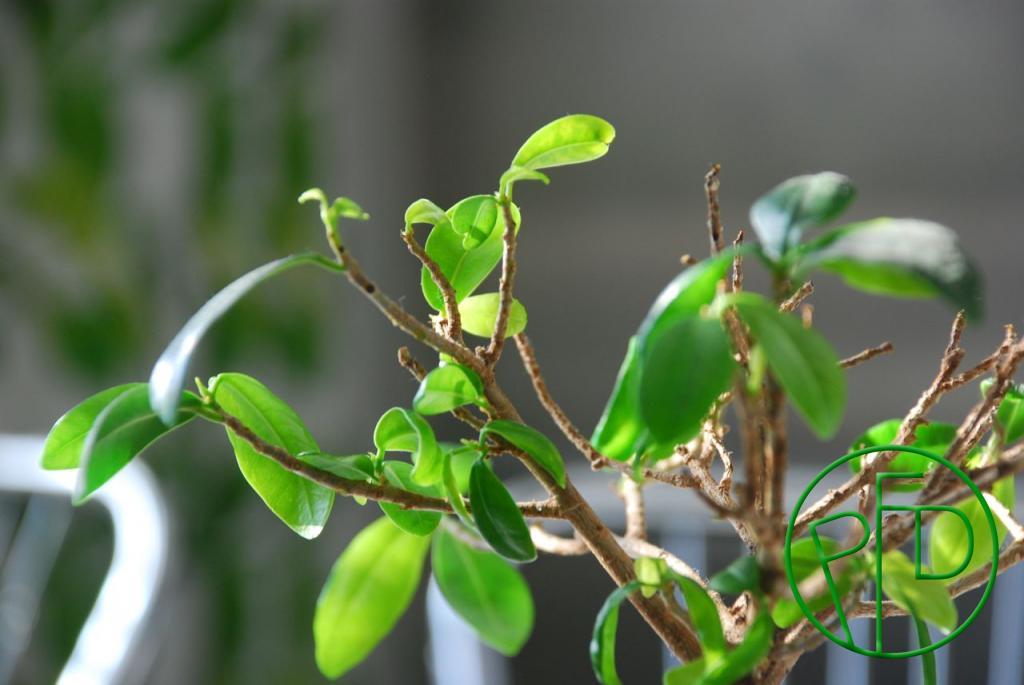 kasvua2