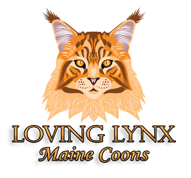 Loving Lynx Maine Coons