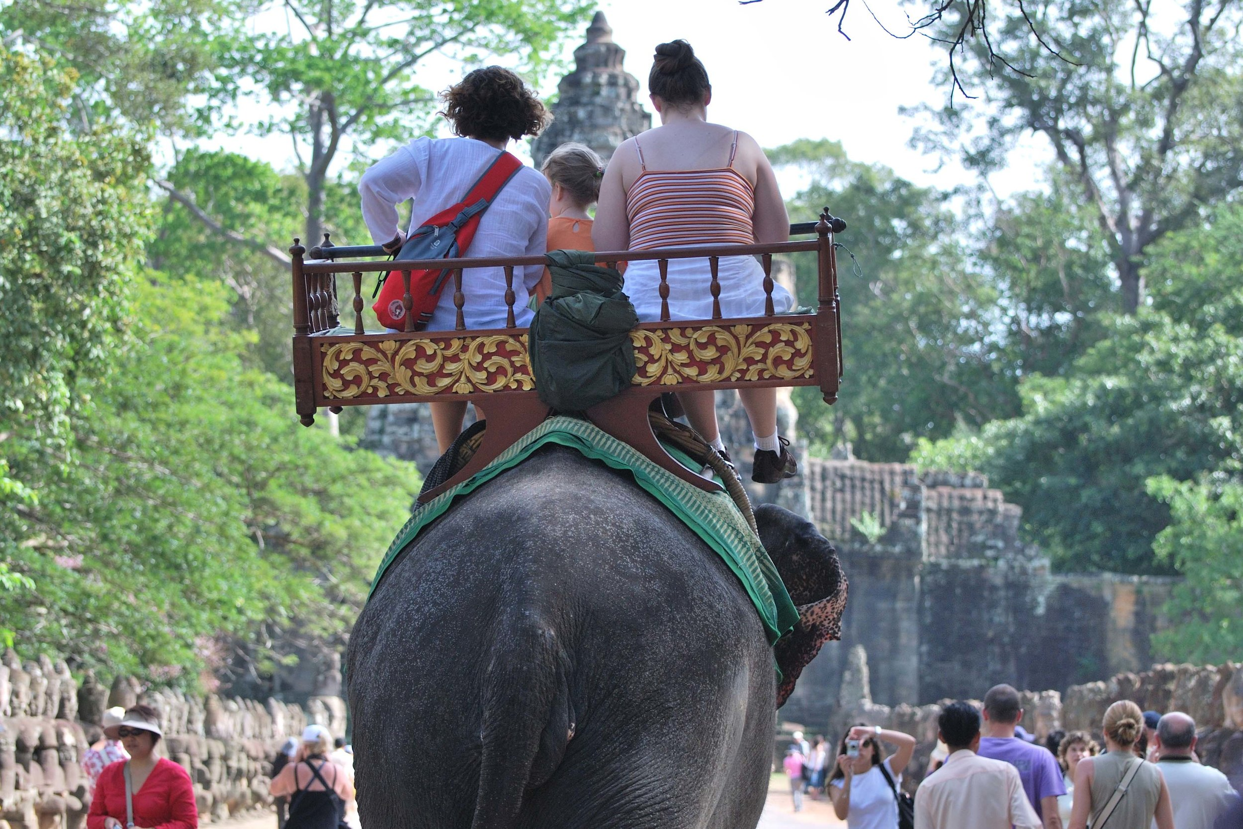 Elephants battle extreme heat to ferry tourists around the ruins of Angkor Wat in Cambodia, where a working elephant dropped dead from exhaustion in April 2016. Image by Osrin / flickr