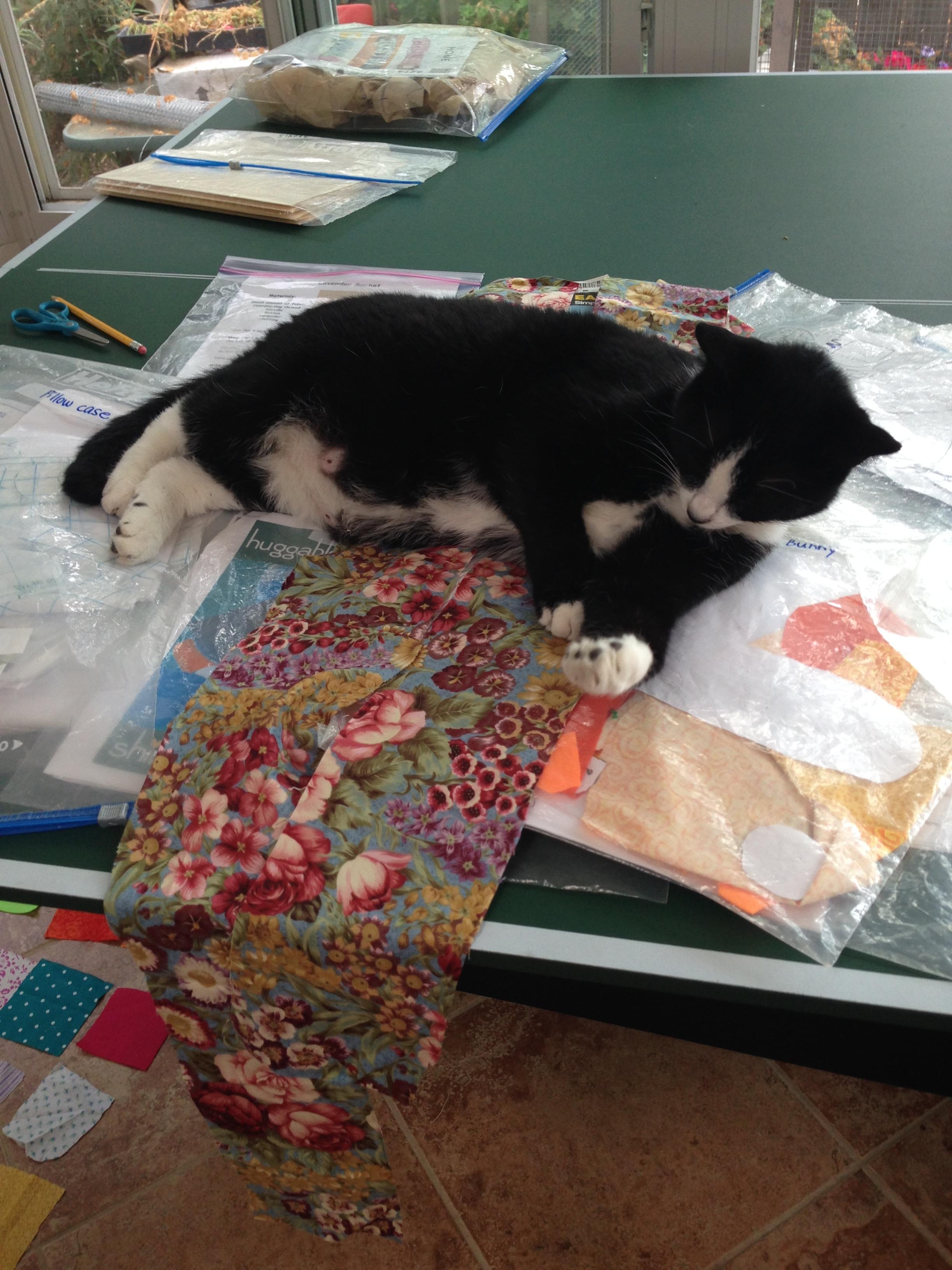 Tux napping on handbag straps.