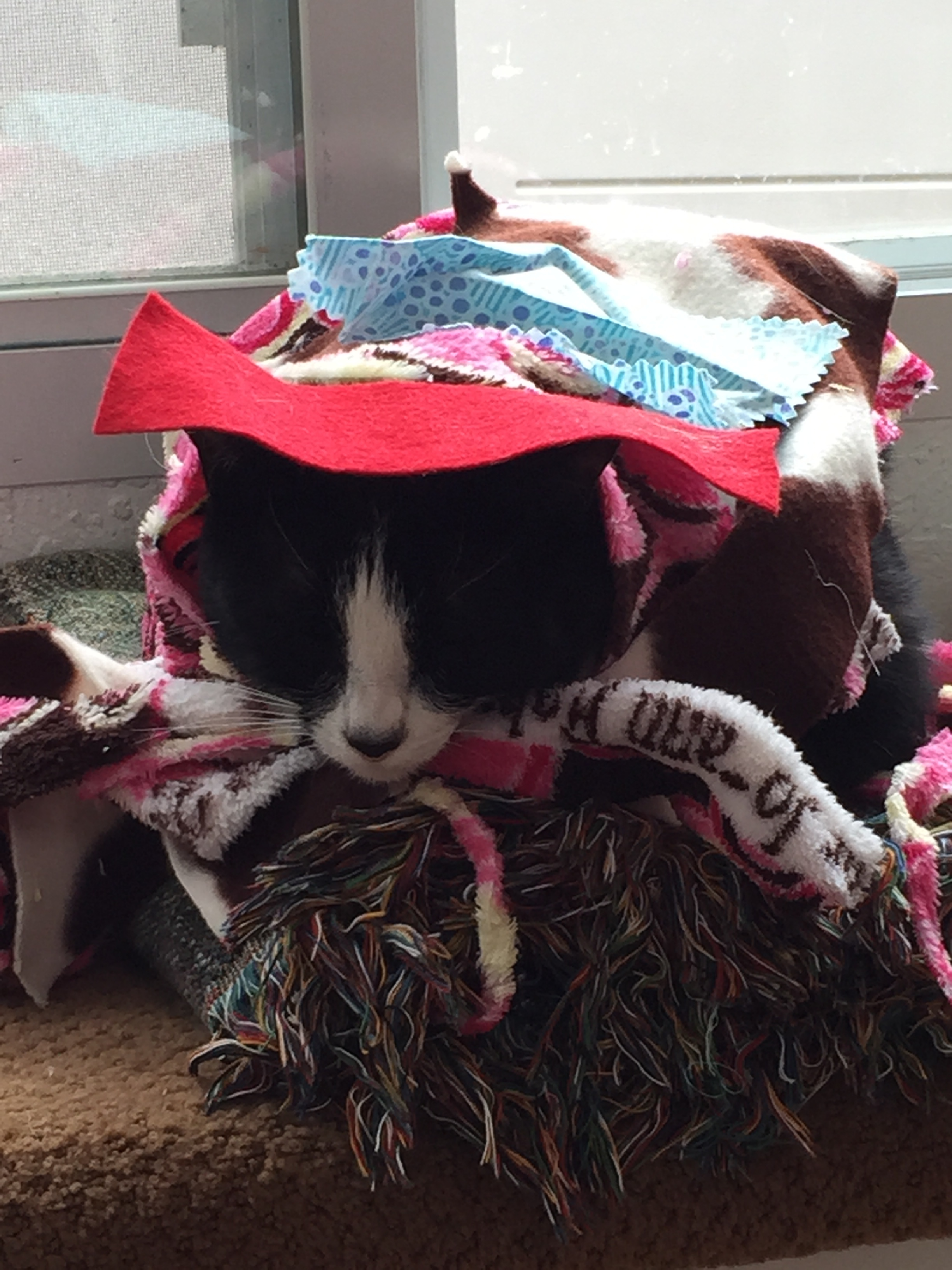 Tux all wrapped up by one of our students.