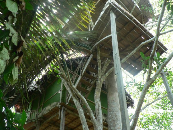 tree house, refugio altiplano, amazon, peru,