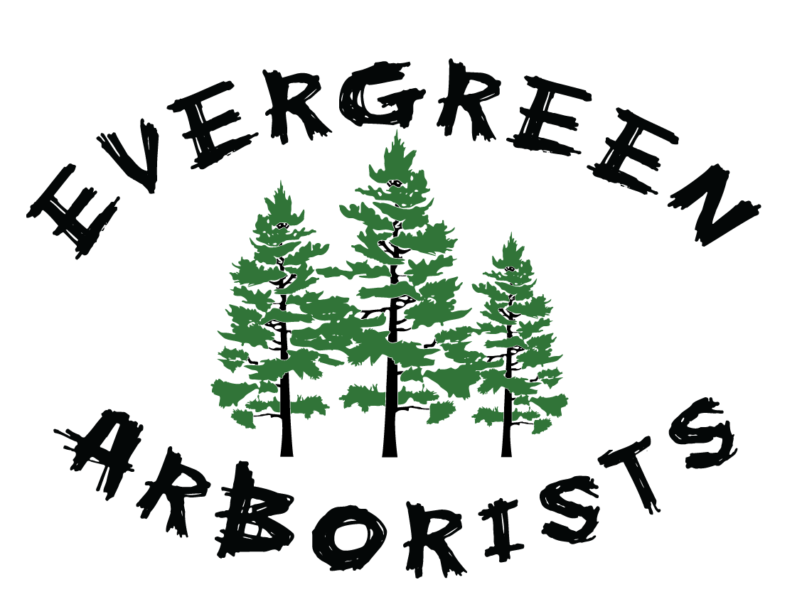 Evergreen Arborists Inc
