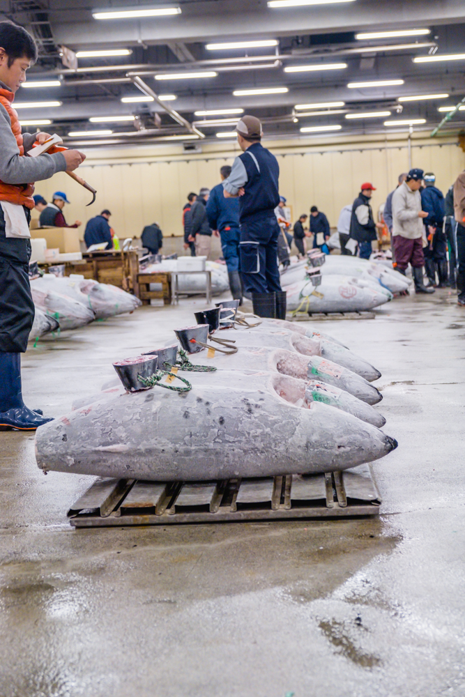 BREAKFAST AT TSUKIJI FISH MARKET | 7 THINGS TO KNOW BEFORE VISITING TSUKIJI FISH MARKET| TSUKIJI FISH MARKET| Guide to visiting Tsukiji fish market in Japan | sushi at TSUKIJI FISH MARKET | Tuna Auction at TSUKIJI FISH MARKET | Tuna Auction | guide to TSUKIJI FISH MARKET| TSUKIJI FISH MARKET Tokyo | TSUKIJI FISH MARKET photography | TSUKIJI FISH MARKET restaurant | (Jōgai-shijō | Jōnai-shijō tsukiji market| tuna auction tokyo