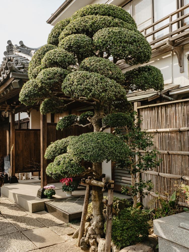 Trees in Shrine