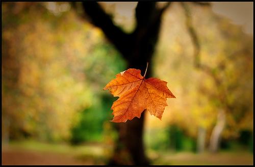 Falling Leaves Lifetime Ministries