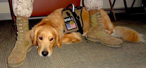 dog training — Blog Posts — Tender Loving Canines