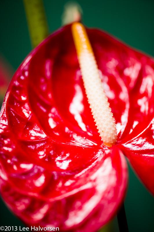 Exotic Flower 1