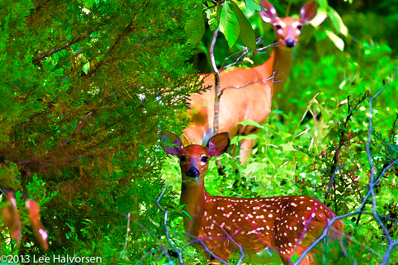 Stylized Fawn & Mother